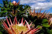 Cape Town - Kirstenbosch Botanical Gardens